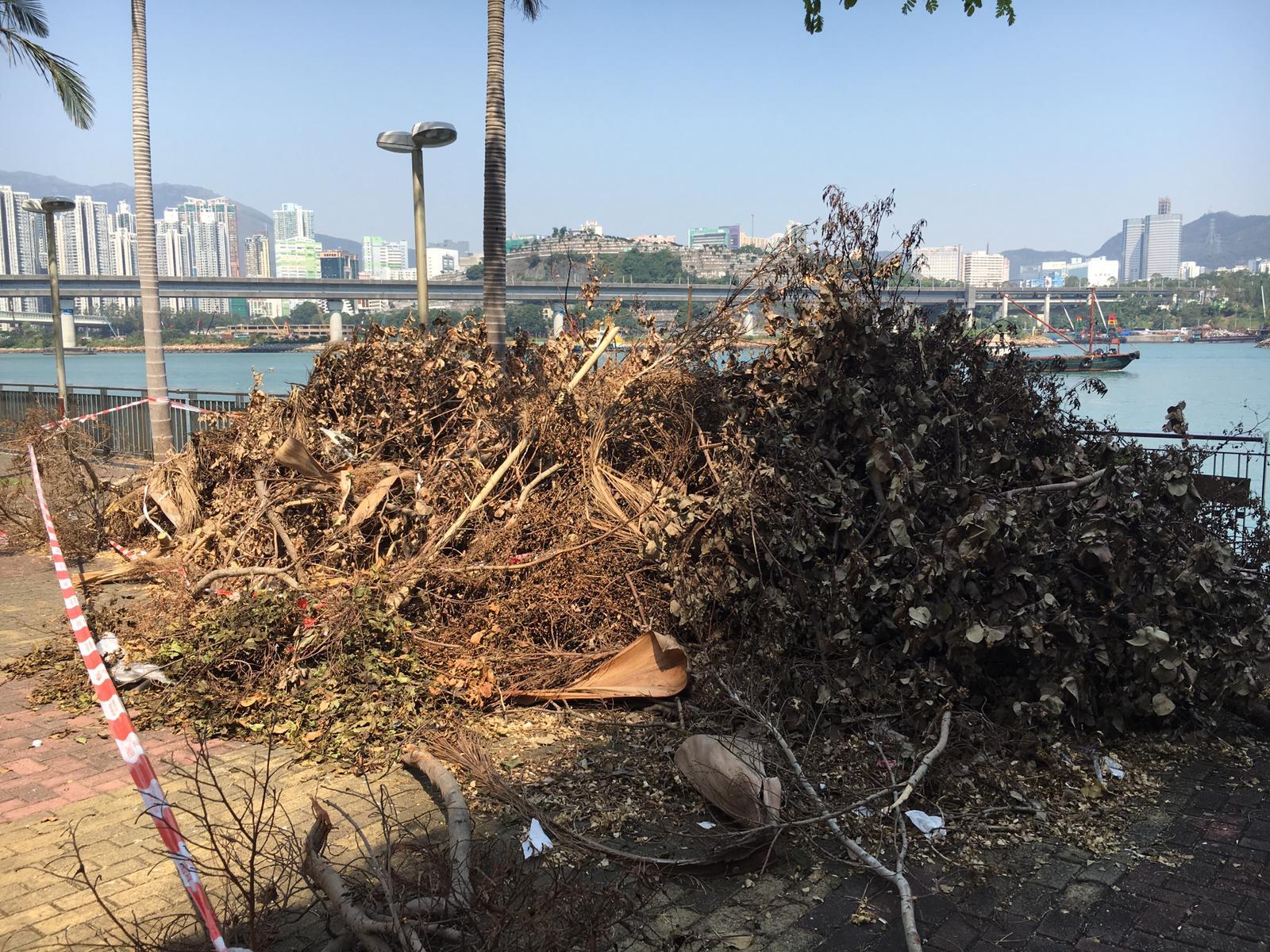 颱風山竹做成大量塌樹