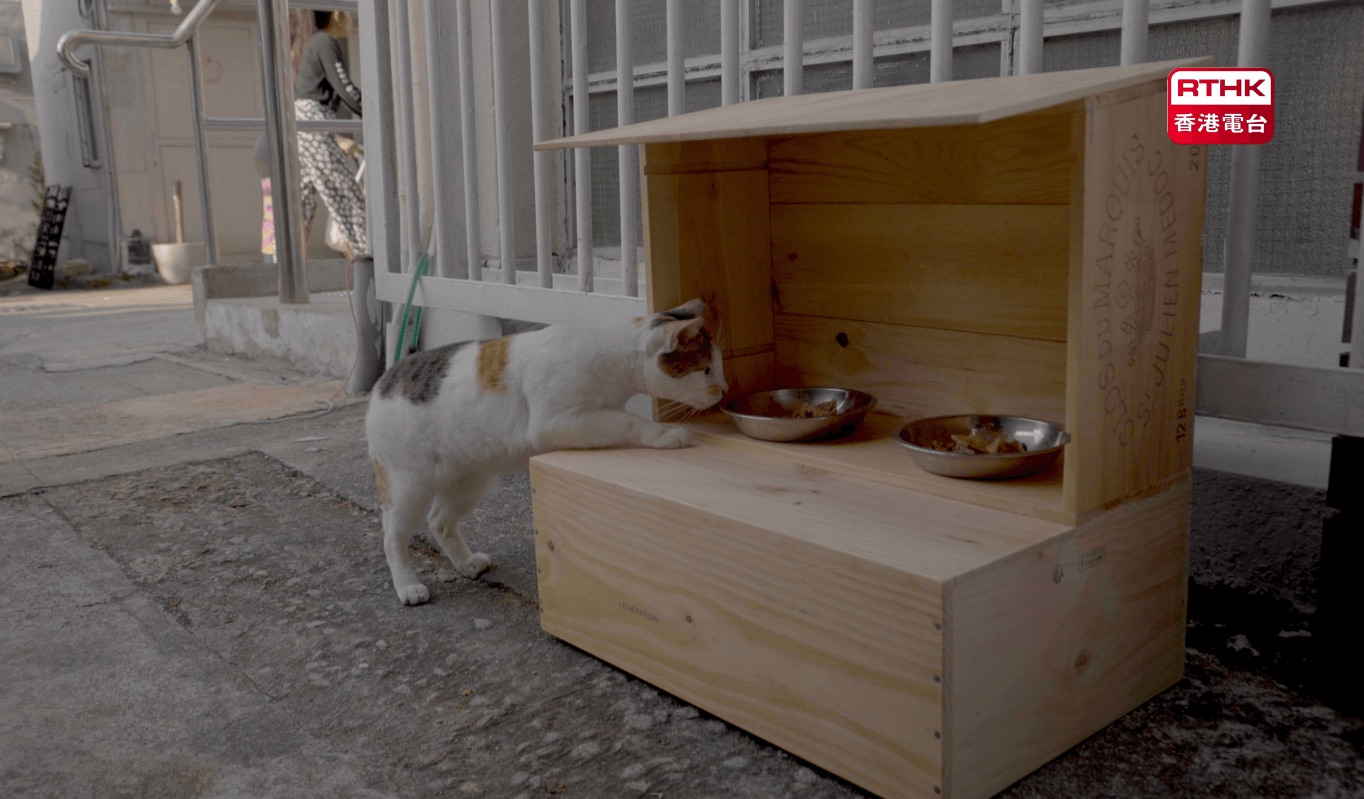 a stray cat approach a cat feeding station